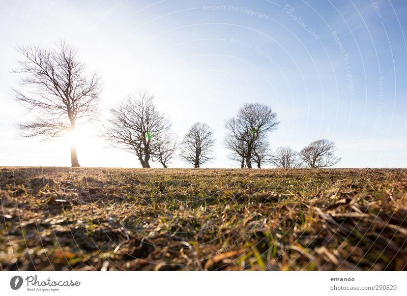 Wetterbuchen Himmel Natur grün Pflanze Baum Sonne Winter Landschaft Wald Umwelt Wiese Berge u. Gebirge Herbst Gras Horizont Park