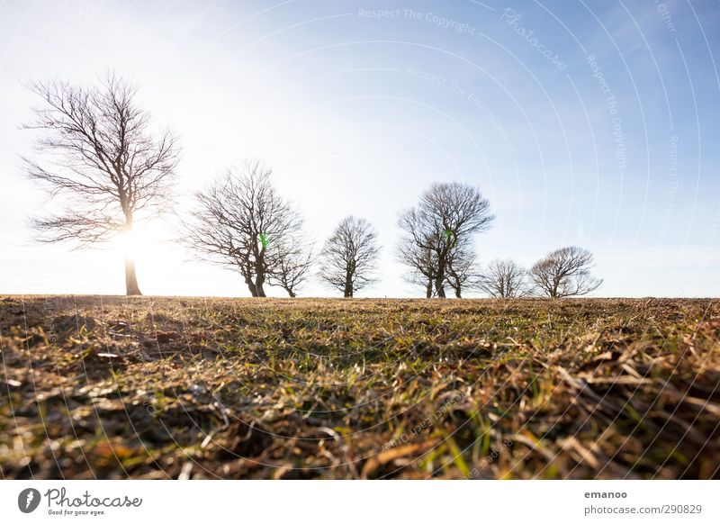 Wetterbuchen Umwelt Natur Landschaft Pflanze Himmel Horizont Sonne Herbst Winter Klima Klimawandel Wind Baum Gras Park Wiese Feld Wald Hügel Berge u. Gebirge