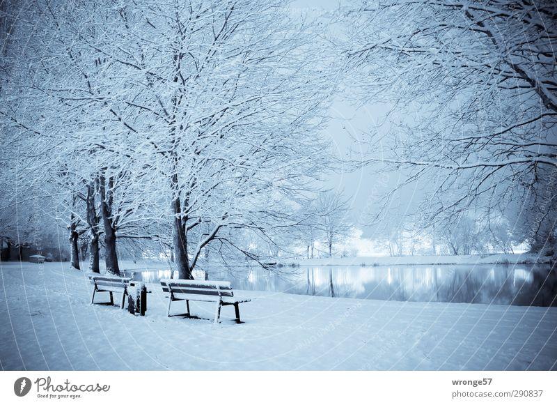 Blauer Teich Nachthimmel Winter Eis Frost Schnee Wiese Magdeburg Deutschland Sachsen-Anhalt Europa Stadt Stadtrand Menschenleer blau Nachtaufnahme