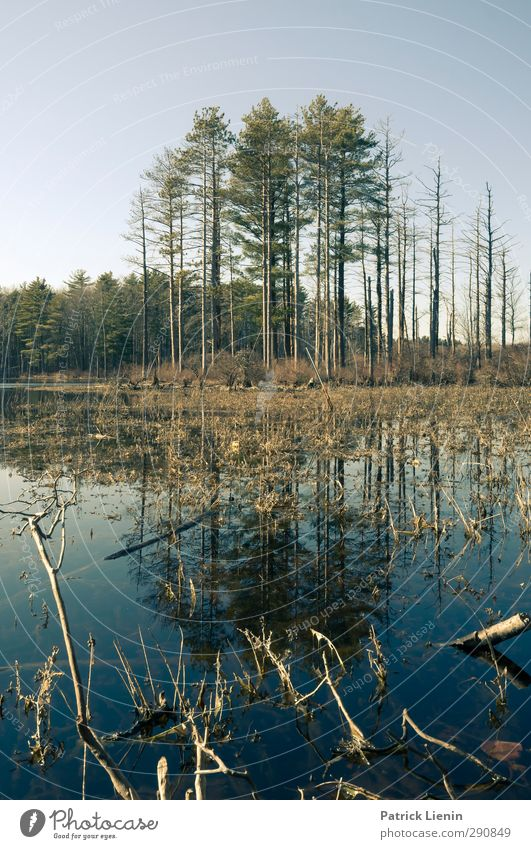 In my backyard Natur Wasser Pflanze Baum Erholung Wald Umwelt Frühling Zufriedenheit ästhetisch Urelemente Hoffnung Seeufer USA Zusammenhalt entdecken
