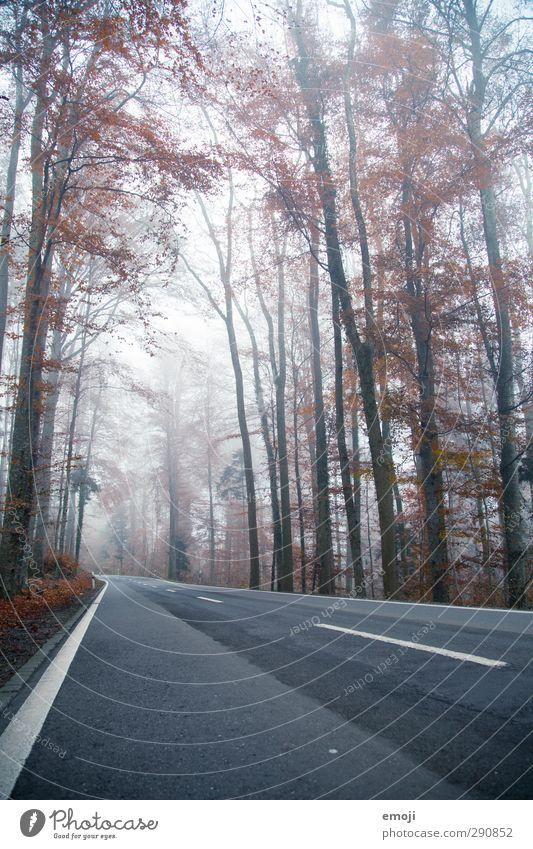 fog Umwelt Natur Landschaft Herbst schlechtes Wetter Nebel Baum Wald dunkel kalt Straße Farbfoto Außenaufnahme Menschenleer Tag Weitwinkel