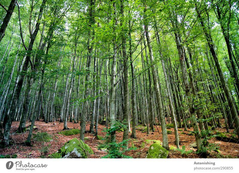 in die Höhe Umwelt Natur Landschaft Pflanze Sommer Wetter Schönes Wetter Wärme Baum Sträucher Moos Blatt Grünpflanze Wald Hügel Felsen stehen dünn hoch braun