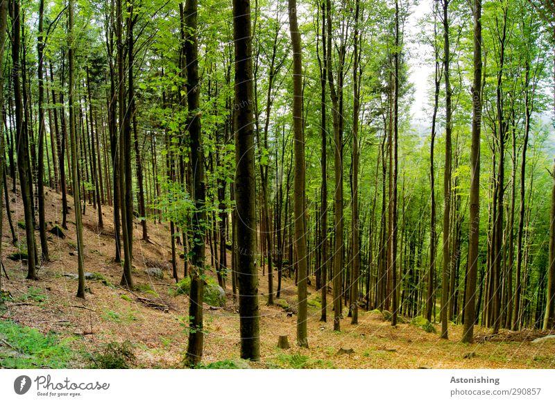 Wald Umwelt Natur Landschaft Pflanze Himmel Sommer Klima Wetter Schönes Wetter Wärme Baum Gras Sträucher Moos Blatt Grünpflanze Hügel Felsen stehen dünn hoch