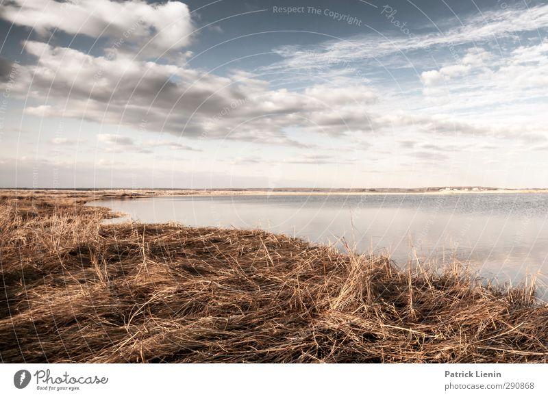 Bleib doch bis es schneit Umwelt Natur Landschaft Pflanze Urelemente Wasser Himmel Wolken Gewitterwolken Sonnenlicht Frühling Wetter Sträucher Wellen Küste