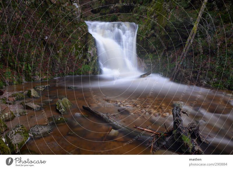 plätscher Landschaft Wasser Winter Klimawandel Pflanze Baum Gras Moos Felsen Berge u. Gebirge Schlucht Flussufer Wasserfall braun grün weiß Baumstumpf Farbfoto