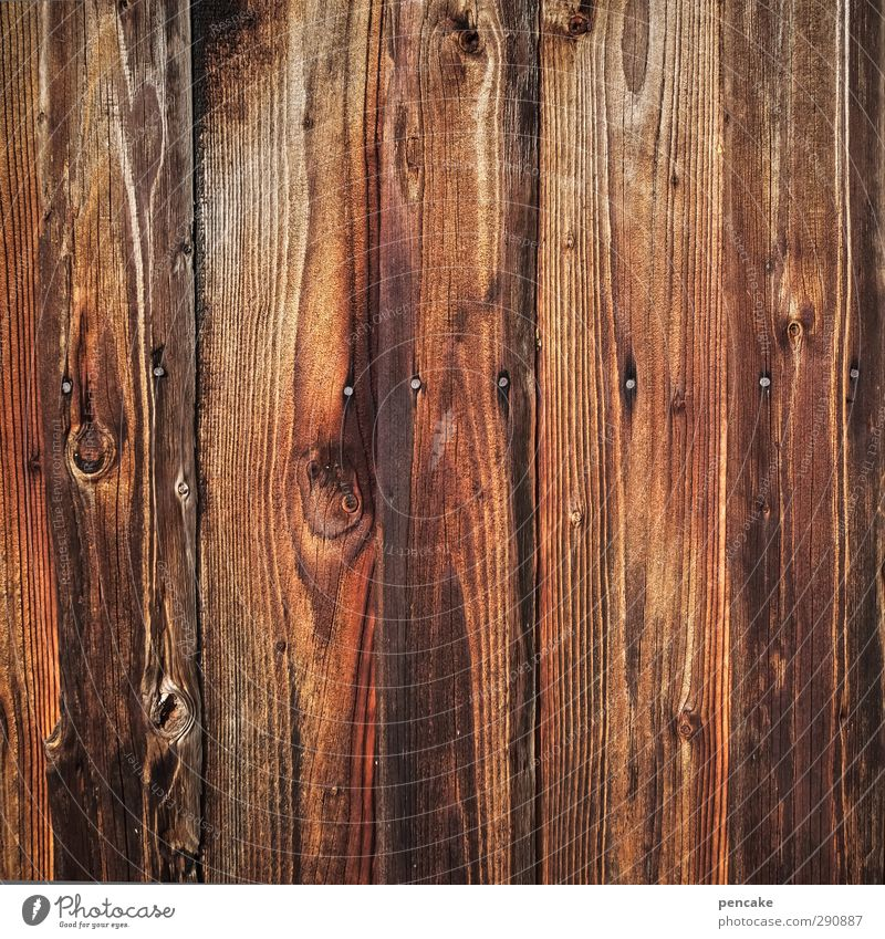 voll das brett Hütte Mauer Wand Holz nah nackt Holzwand Holzstruktur Maserung Nagel Holzbrett Holzhütte Farbfoto Gedeckte Farben Außenaufnahme Nahaufnahme