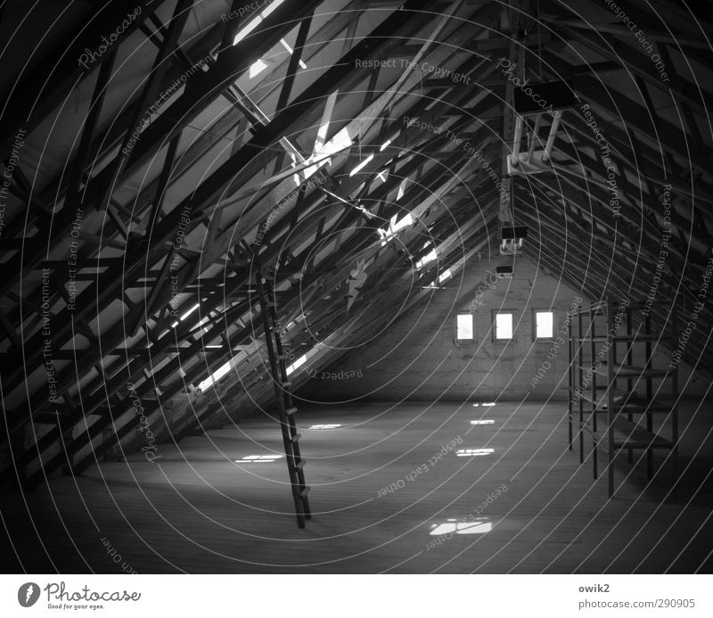 Viel Platz Innenarchitektur Raum Dachboden Regal Leiter Dachfenster Neonlampe Holz Metall Kunststoff stehen warten dunkel groß leer Dachgebälk Dachgeschoss