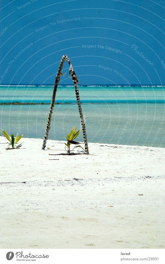 Aitutaki Dreams Himmel Meer Strand Sand Karibisches Meer Riff Kalifornien Lagune Los Angeles Traumstrand Kokospalme