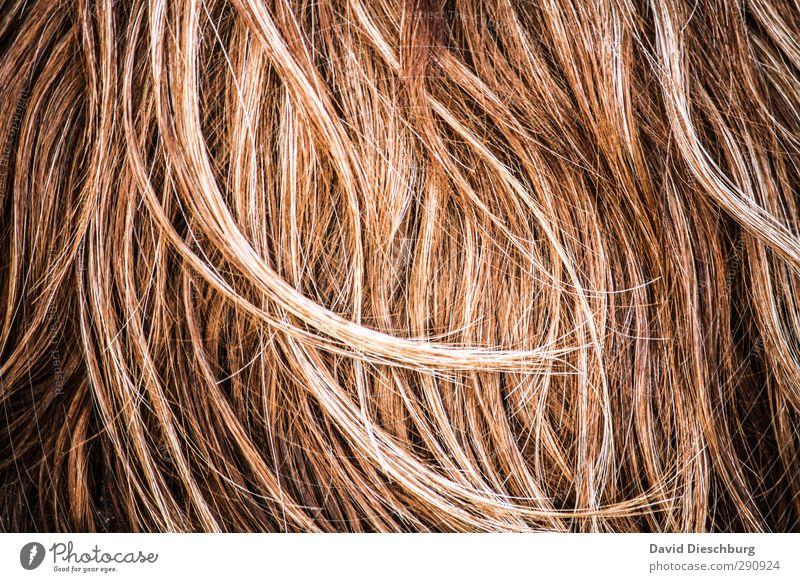 Struwwelpeter Tier Haustier Nutztier Wildtier braun orange schwarz weiß Haare & Frisuren Allergie Haarsträhne Haarschopf Rind blond rothaarig brünett