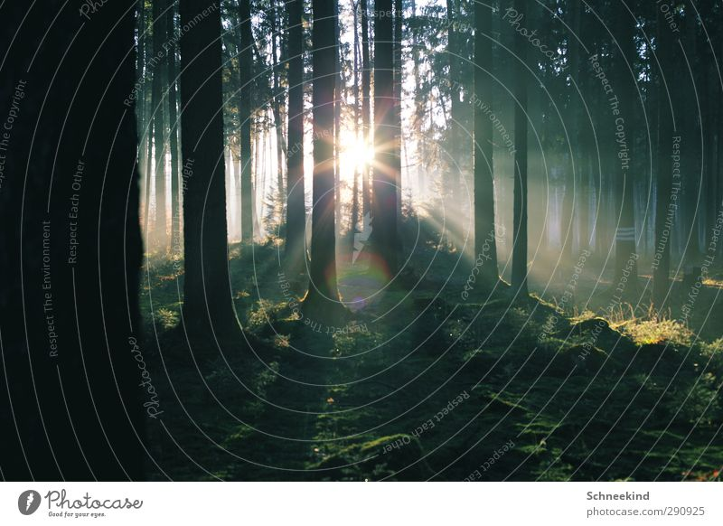 Lichterflut II Natur grün schön Pflanze Baum Sonne Tier Blatt Landschaft Wald Umwelt Gras Luft frisch Schönes Wetter Tanne