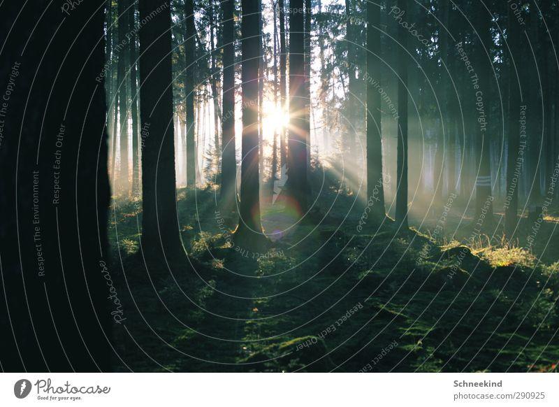 Lichterflut II Umwelt Natur Landschaft Pflanze Tier Sonne Schönes Wetter Baum Gras Moos Blatt Grünpflanze Wildpflanze Wald Duft frisch schön grün Außenaufnahme