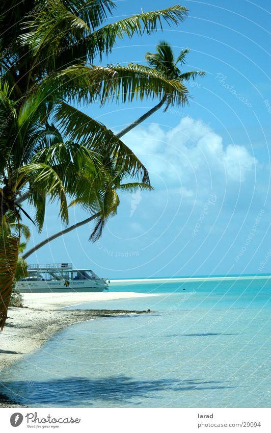 Südseetraum Palme Strand Meer Lagune Riff Karibisches Meer türkisblaues Wasser