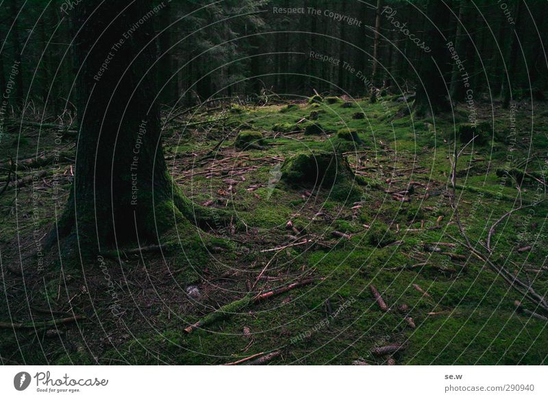Hänsel und Gretel Natur grün Baum Einsamkeit Winter ruhig Landschaft schwarz Wald dunkel Berge u. Gebirge kalt Herbst Frühling Angst Erde