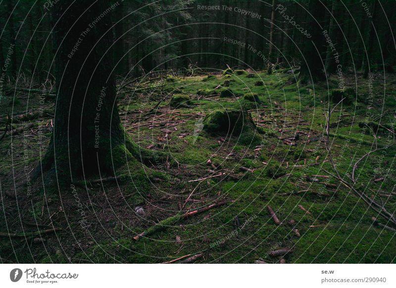 Hänsel und Gretel wandern Natur Landschaft Erde Frühling Herbst Winter Baum Moos Baumstumpf Wald Urwald Berge u. Gebirge Harz dunkel gruselig kalt grün schwarz