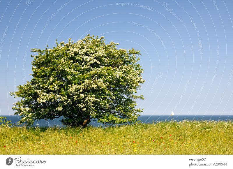 Frühsommer an der See Himmel Natur blau Ferien & Urlaub & Reisen grün Sommer Pflanze Baum Meer Landschaft Ferne Küste Blüte Horizont Tourismus Schönes Wetter