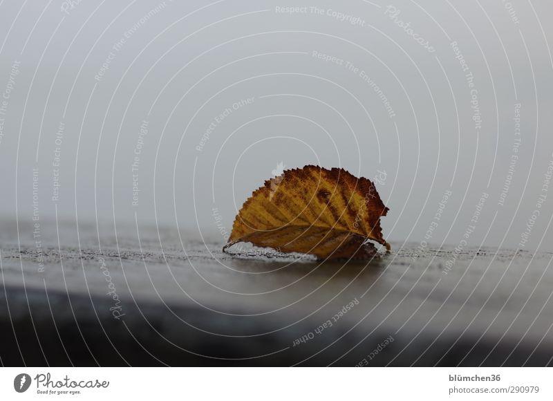Wann kommt der Winter? Natur alt Blatt gelb dunkel kalt Herbst grau braun liegen Stimmung trist Wandel & Veränderung Vergänglichkeit einfach Spitze
