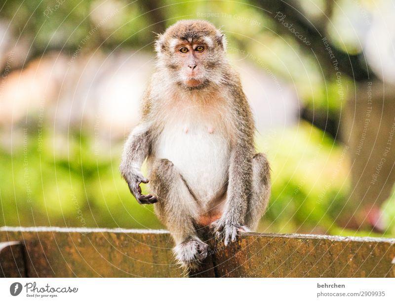 wer hält länger durch?! Ferien & Urlaub & Reisen Natur Tier Ferne Tourismus außergewöhnlich Freiheit Ausflug Wildtier Abenteuer fantastisch beobachten Fernweh