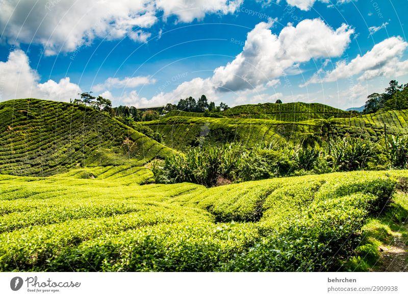 bananen und tee Himmel Ferien & Urlaub & Reisen Natur Pflanze grün Landschaft Baum Wolken Blatt Ferne Berge u. Gebirge Tourismus außergewöhnlich Freiheit