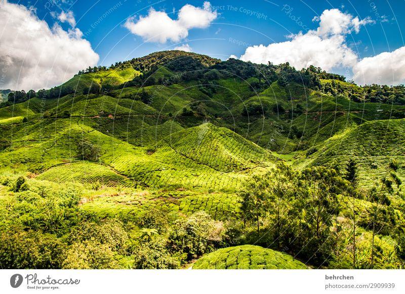 in den grünen bergen Ferien & Urlaub & Reisen Tourismus Ausflug Abenteuer Ferne Freiheit Natur Landschaft Himmel Wolken Pflanze Baum Sträucher Blatt Nutzpflanze
