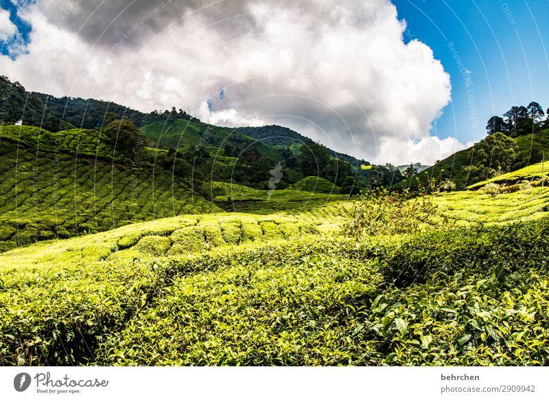 freitagstee Himmel Ferien & Urlaub & Reisen Natur Pflanze grün Landschaft Wolken Blatt Ferne Berge u. Gebirge Umwelt Tourismus außergewöhnlich Freiheit Ausflug
