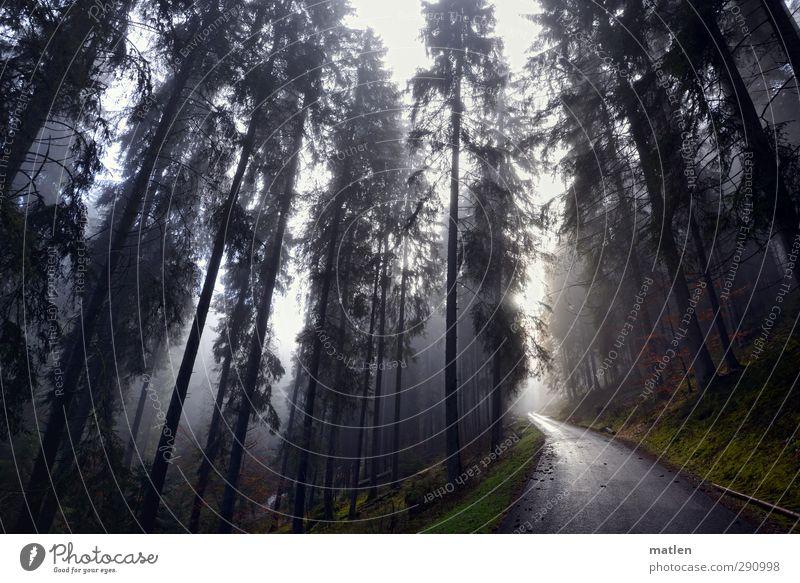 black forrest Landschaft Pflanze Himmel Winter Wetter Nebel Baum Gras Moos Wald Berge u. Gebirge Verkehrswege Straße grün schwarz weiß Gedeckte Farben