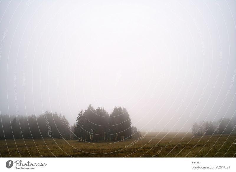 einsame seelen Umwelt Urelemente Herbst Winter schlechtes Wetter Nebel Regen Baum Park Feld Wald Hügel Berge u. Gebirge Harz Erholung dunkel kalt grau