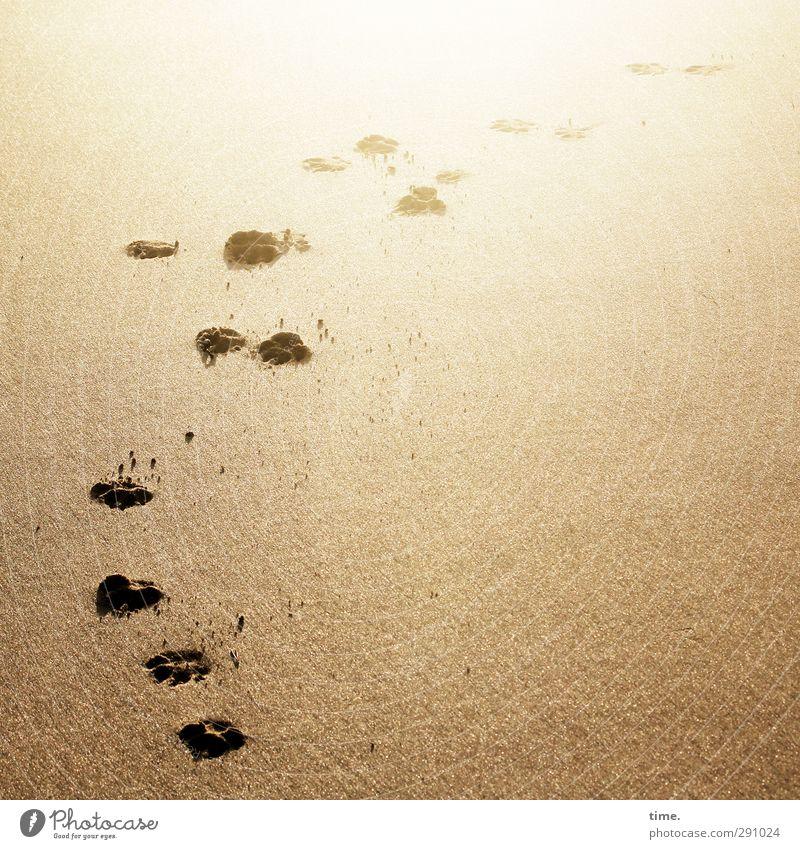 Lebenslinien #57 Umwelt Sand Schönes Wetter Küste Strand Spuren Fährte laufen elegant heiß Originalität sportlich gelb gold Abdruck Farbfoto Außenaufnahme