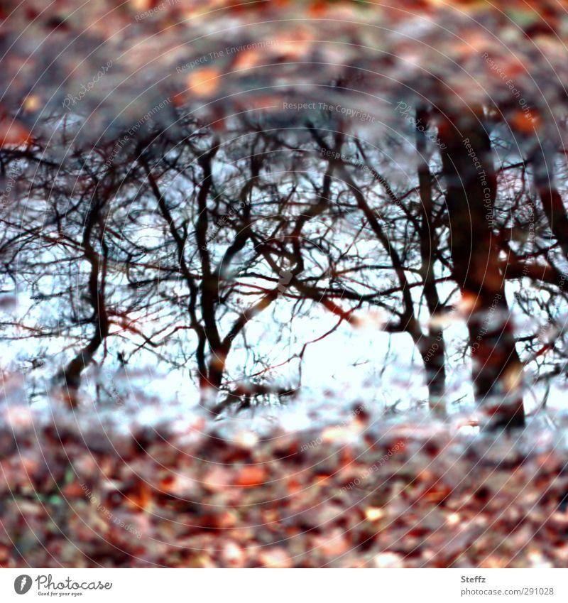 November gespiegelt in einer Pfütze Pfützenspiegelung Pfützenbild Herbstlaub Herbstwald Novemberbild Novemberblues Sinn Novemberstimmung hellblau