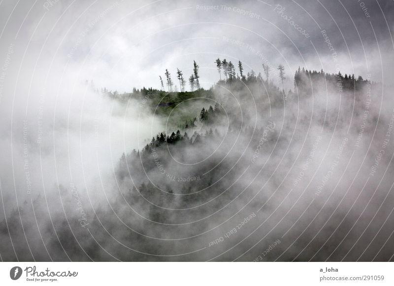 berg wald baum nebel Natur Landschaft Urelemente Luft Himmel Wolken Sommer Klima schlechtes Wetter Nebel Regen Gewitter Baum Wald Alpen Berge u. Gebirge Gipfel