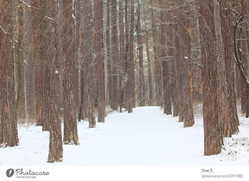 Winterwald Natur Pflanze Baum Einsamkeit Landschaft Wald Umwelt Schnee Urelemente