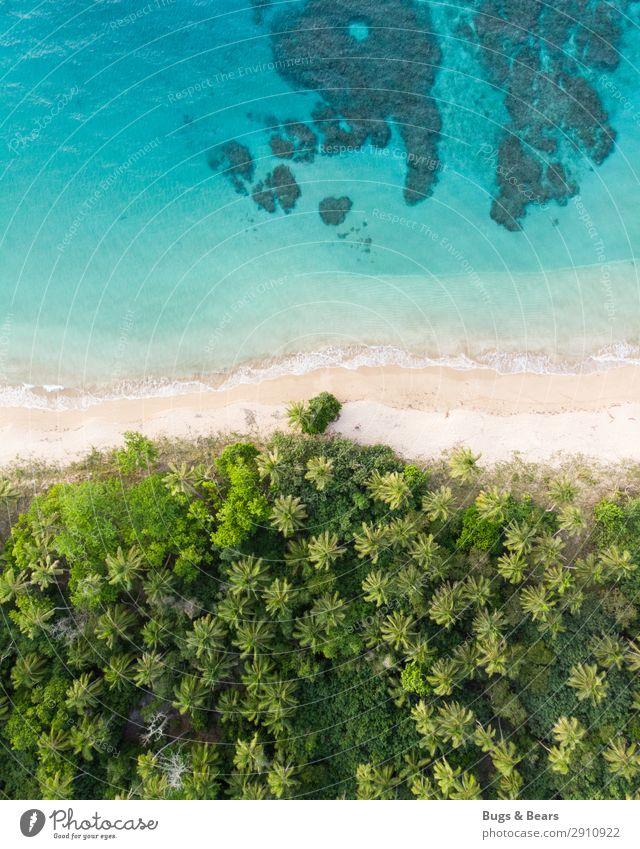 Traumstrand Natur Wasser Sommer Schönes Wetter Urwald Wellen Küste Strand Riff Korallenriff Meer Insel Oase Glück Abenteuer Paradies Palme Pazifik Pazifikstrand