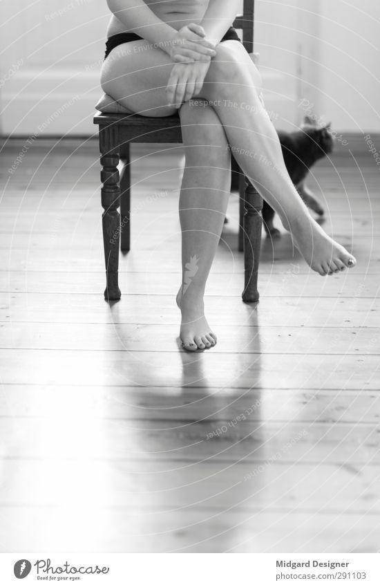 Sitzende Äktin Katze Mensch Jugendliche schön Tier Erwachsene Junge Frau feminin Erotik Holz grau 18-30 Jahre Beine Fuß Stimmung Freizeit & Hobby