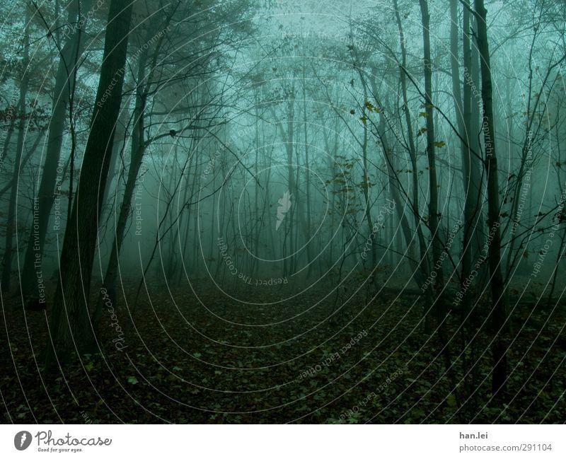 Nebel Natur Herbst Wald frieren Waldboden Blatt Forstwirtschaft Geister u. Gespenster Dämmerung spukhaft unheimlich gefährlich Einsamkeit Farbfoto Außenaufnahme