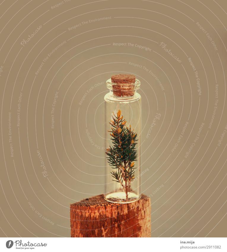 Die Natur eingefangen II Umwelt Pflanze nachhaltig natürlich Holz natürliche Farbe Naturliebe ökologisch Glas Farbfoto Gedeckte Farben mehrfarbig Innenaufnahme