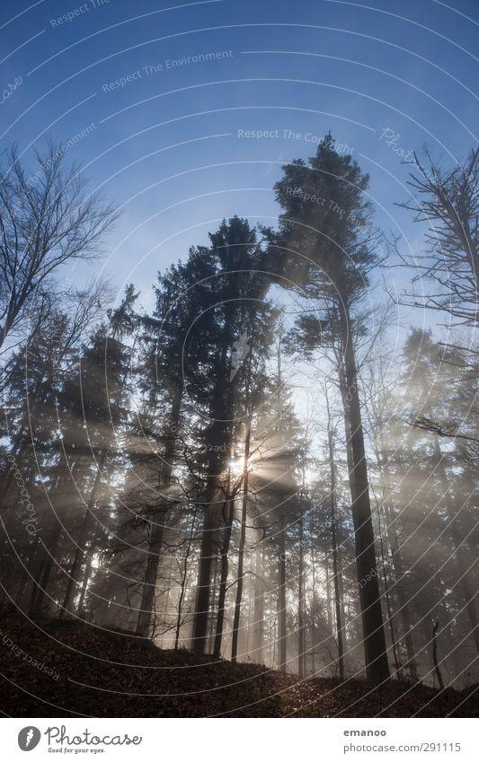 Nebelbaumgrenze Ferien & Urlaub & Reisen Berge u. Gebirge wandern Umwelt Natur Landschaft Pflanze Wasser Himmel Wolken Sonne Klima Wetter Baum Wald leuchten