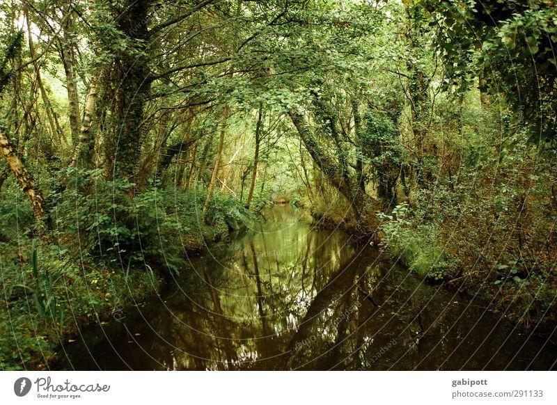 Neulich im Dschungel Natur grün Pflanze Baum Landschaft Wald Umwelt dunkel natürlich Zufriedenheit Idylle Urelemente Netzwerk entdecken Urwald Bach