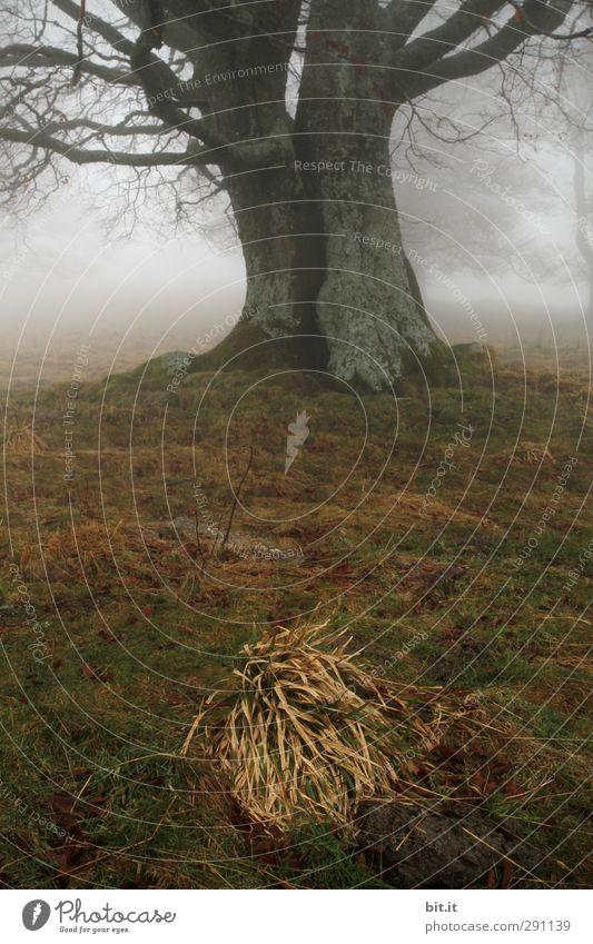 bissel Grasbüschel Natur Pflanze Baum Winter Landschaft Wiese Berge u. Gebirge kalt Herbst Felsen Stimmung Erde Klima Nebel Hügel