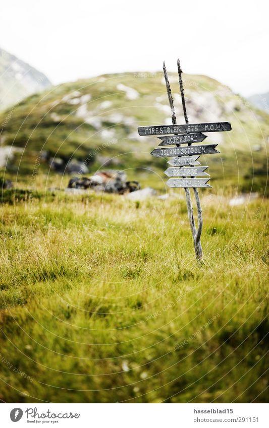 Norwegen Natur Ferien & Urlaub & Reisen Pflanze Sommer Erholung Landschaft ruhig Tier Ferne Berge u. Gebirge Umwelt Frühling Wiese Zufriedenheit Tourismus wandern