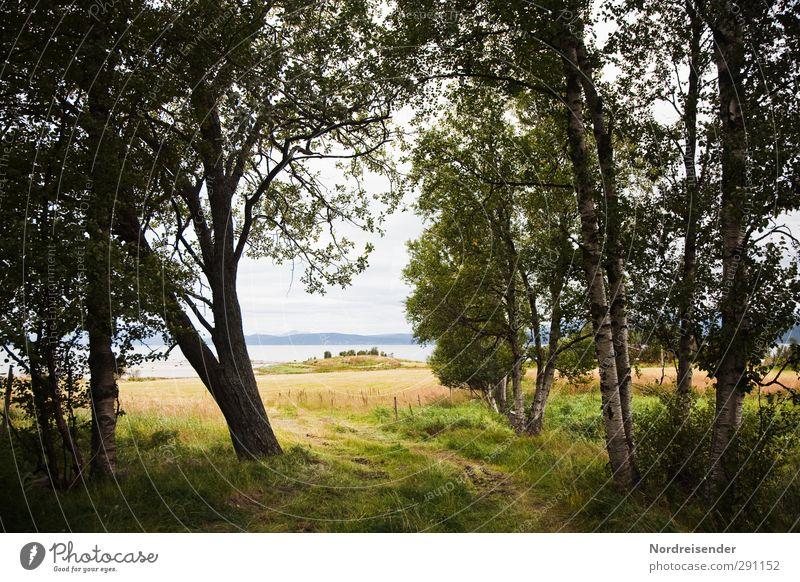Weg am See ruhig Ferien & Urlaub & Reisen Ausflug Sommer Sommerurlaub Natur Landschaft Wasser Schönes Wetter Baum Wiese Feld Wald Seeufer Wege & Pfade Erholung