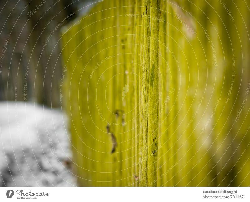 mossy green Zaun Holz alt ästhetisch einfach lang natürlich schön grün Gefühle Sicherheit Schutz Romantik geduldig ruhig standhaft bescheiden Neugier Abenteuer