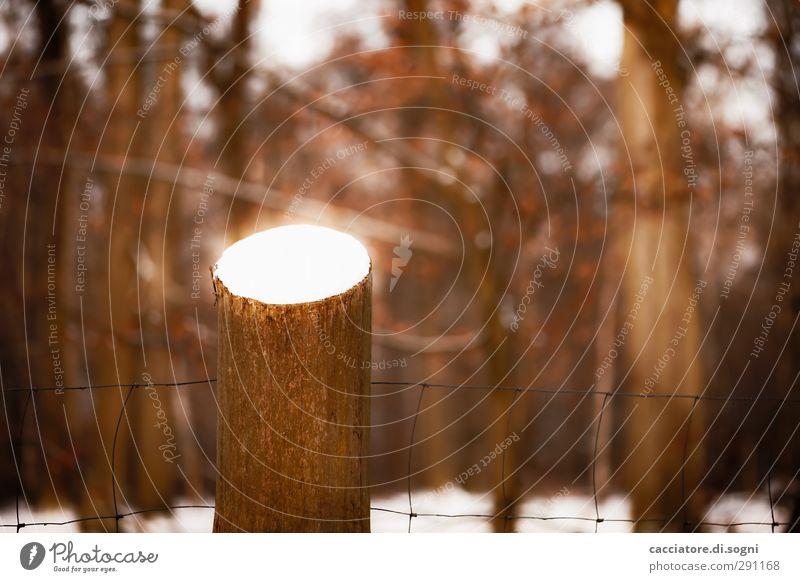 ignition Landschaft Winter Baum Wald Zaun Pfahl Aggression außergewöhnlich bedrohlich dunkel fantastisch heiß braun orange Überraschung Sorge Schmerz Angst