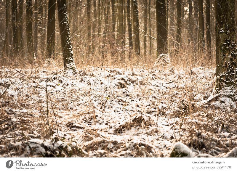 winter wonderland Natur schön Pflanze Baum Einsamkeit Winter ruhig Landschaft Wiese Schnee Gefühle Freiheit braun Stimmung natürlich orange