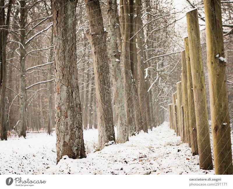 similar but different Winter Schnee Baum Wald Zaun Wege & Pfade Holzpfahl Linie außergewöhnlich einfach Freundlichkeit hoch braun weiß Stimmung Tatkraft