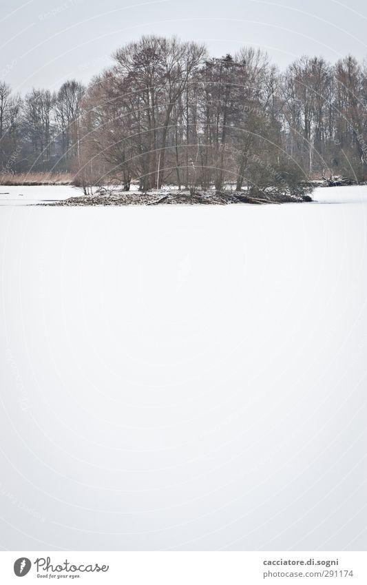 below zero schön weiß Baum Einsamkeit Winter ruhig Landschaft Ferne kalt Schnee See hell Stimmung Insel Idylle ästhetisch
