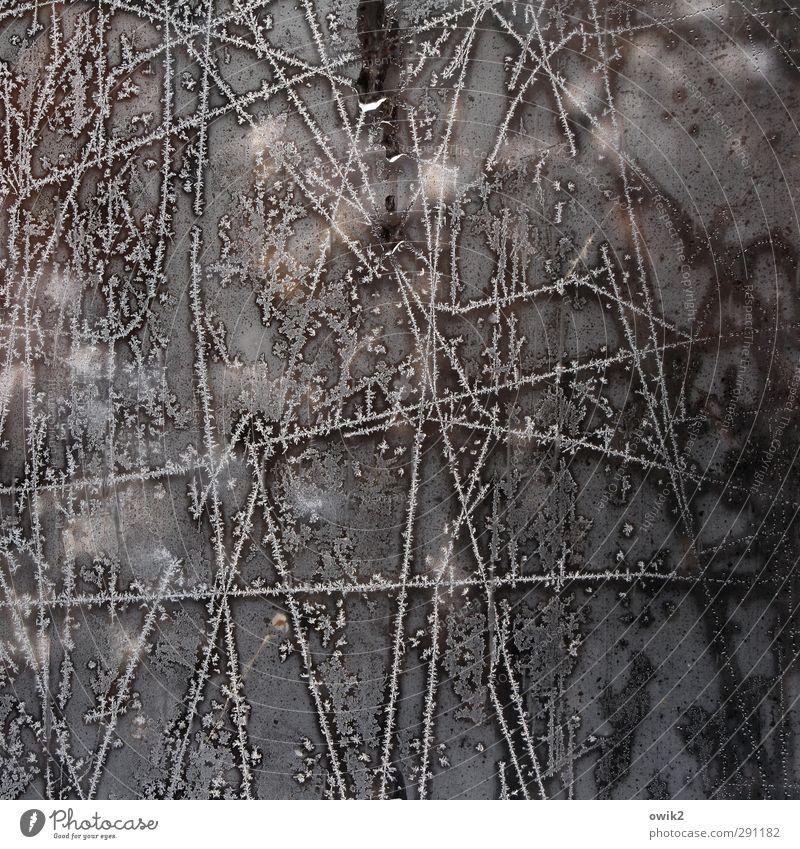 Zugefroren Natur Winter Eis Frost Blume Eisblumen frieren glänzend leuchten kalt Fensterscheibe Glas Glasscheibe Linie Farbfoto Gedeckte Farben Innenaufnahme