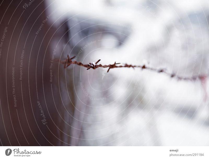 Kälte schmerzt Natur Winter Umwelt Wiese kalt Schnee Draht stachelig Stacheldraht Stacheldrahtzaun