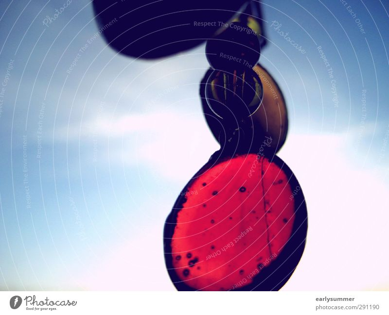 Glasperlenspiel Himmel blau schön Sommer rot Erholung schwarz Fenster Herbst Frühling Feste & Feiern Hintergrundbild glänzend gold Dekoration & Verzierung
