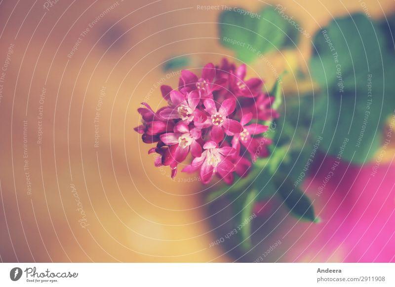 Blümelein in pinkem Purpur Dekoration & Verzierung Natur Pflanze Frühling Blume Sträucher Blatt Blüte Blumenstrauß Duft frisch schön natürlich wild gelb grün