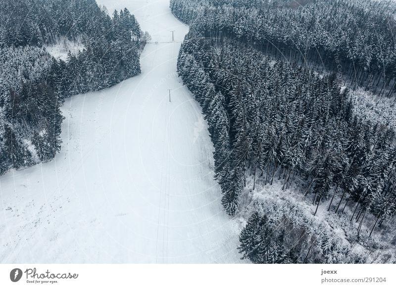 Schneise Landschaft Winter Schnee Wald kalt klein schwarz weiß ruhig Freiheit Umwelt Wege & Pfade Vogelperspektive Farbfoto Gedeckte Farben Außenaufnahme