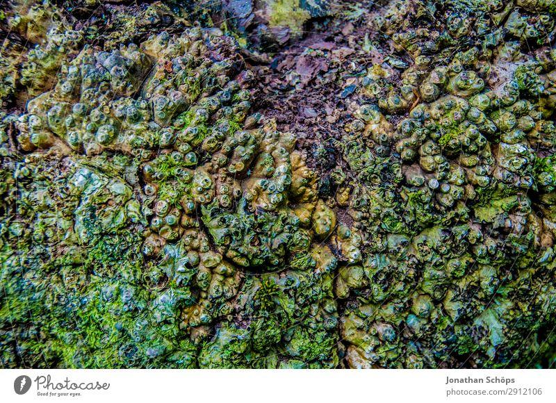 Moos am Baum Textur Natur grün Landschaft wandern Nationalpark Schottland rau Großbritannien Edinburgh Moosteppich